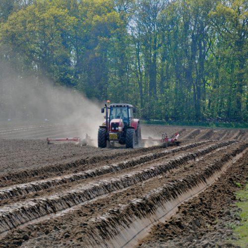 Potato-Ploughing